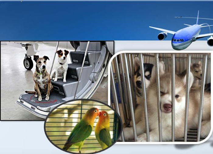 Photo of Quy định của Vietnam Airlines về vận chuyển động vật cảnh